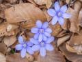 Fialová květina. Pro nás neznámý druh.