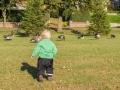 Adámek loví husy. Ulovil akorát tak hovno :)