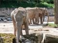 Sloni byli opravdu blízko a pěkní.