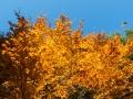 Podzim v celé své kráse.
