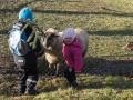 V závěru ještě setkání s ovcemi.