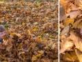 Pro začátek trochu podzimního blbnutí ve Vrbně.