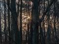 ...a prosvítá skrz stromy.