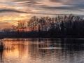 Západ slunce s labutěmi.